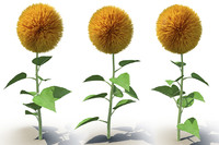 3d model sunflower flower