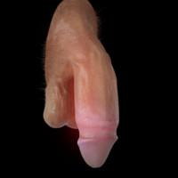 realistic penis 3d model