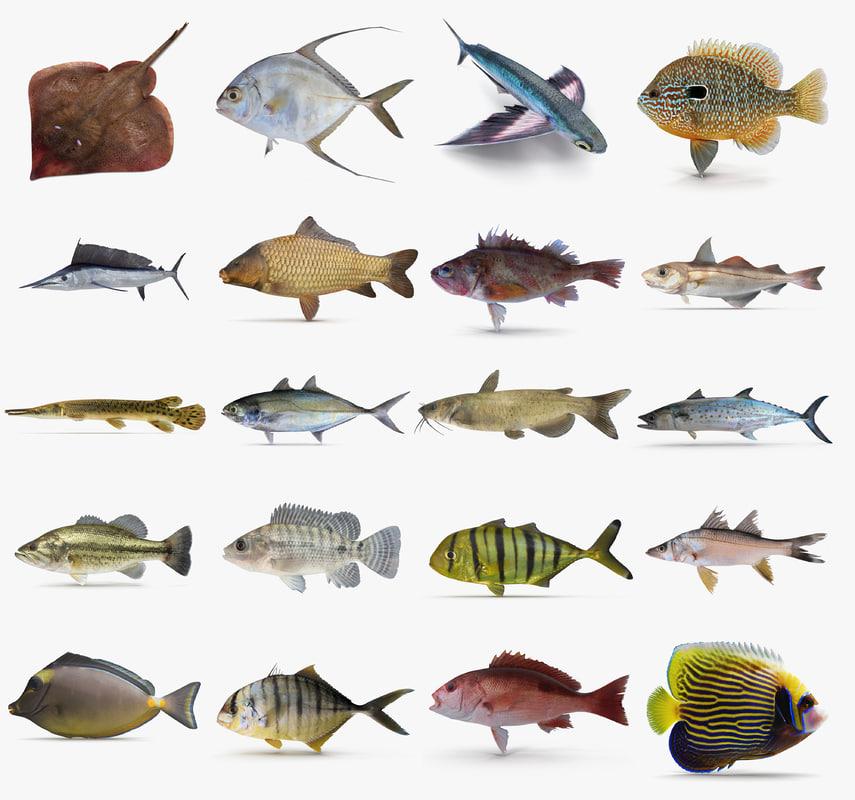 3d dxf fish for 13 fishing origin c
