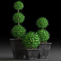 plants 15 3d model