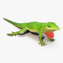 Anoles Lizard 3D models