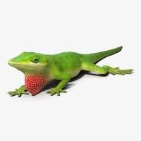 3d model of carolina anole lizard pose