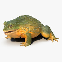 african bullfrog pose 3 3d model