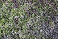 wood bark tree texture 2