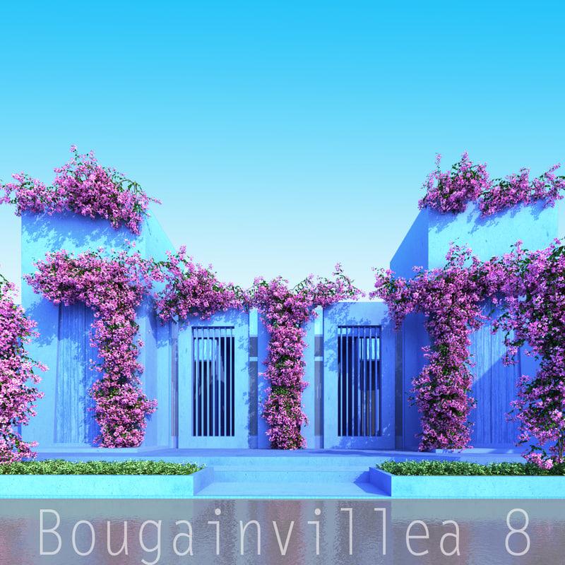 Bougainvillea_8_00.jpg
