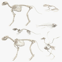 3d model animal skeletons