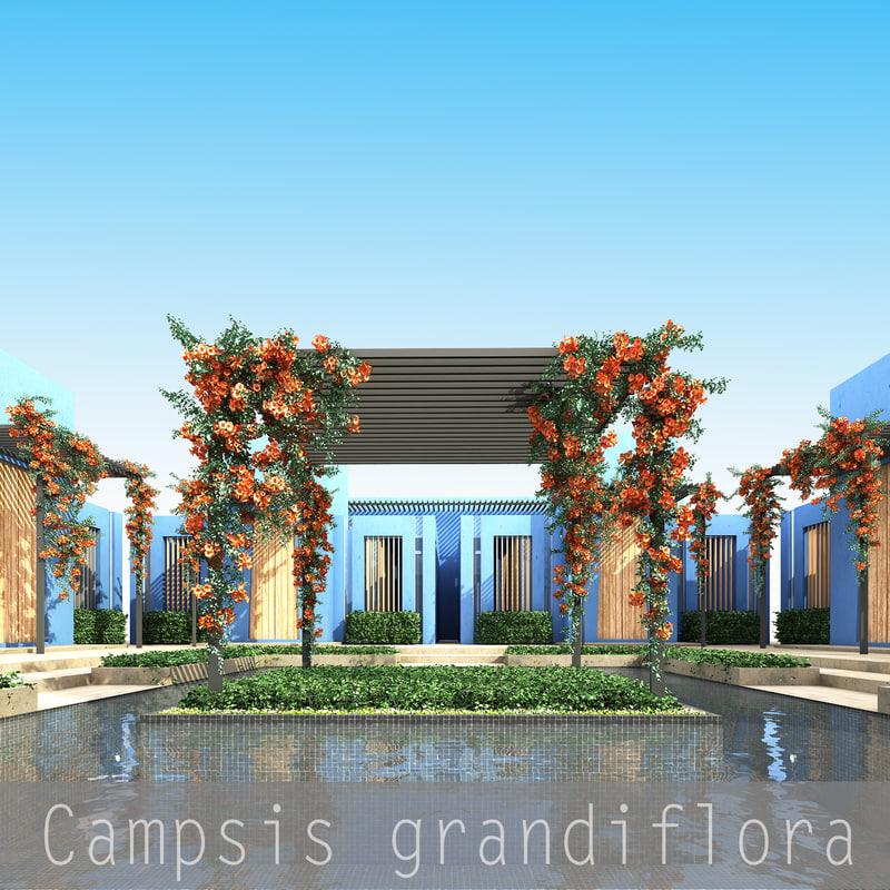 Campsis grandiflora_00.jpg