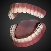 3d obj mouth interior gums teeth tongue