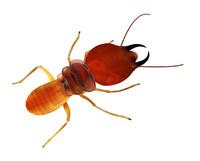obj termite soldier
