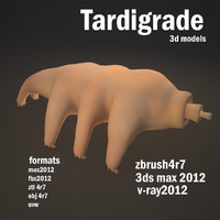 3d model tardigrade animal water