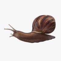 3d snail 02