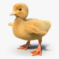 3d model duckling fur