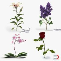 flowers 2 obj