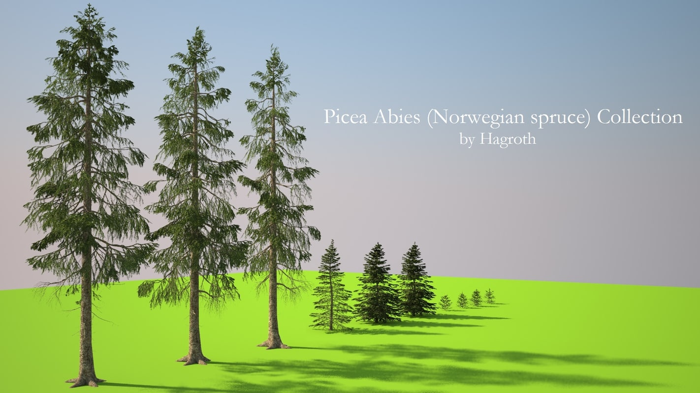 Picea abies cover.jpg