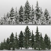 20 picea glauca trees max