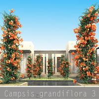 3d model 3 flower plant