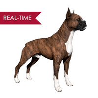 boxer dog real-time real time 3d 3ds