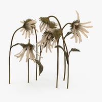 dead daisies max