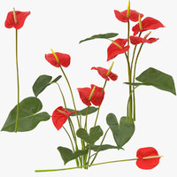 anthrium anthurium 3d model