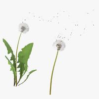 dandelion max