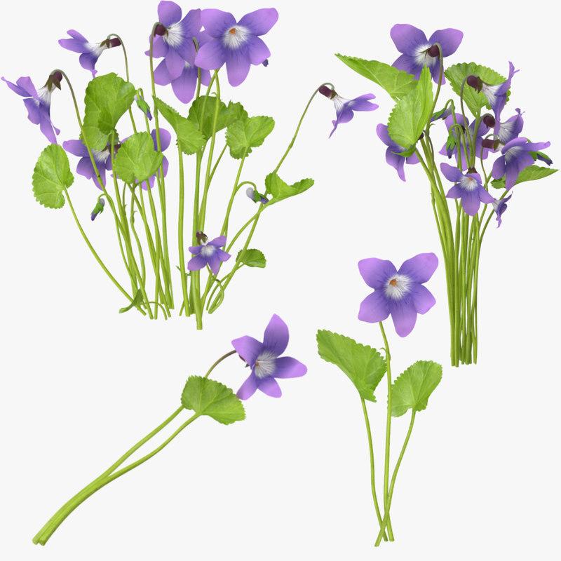 Violet_Collection_001.jpg