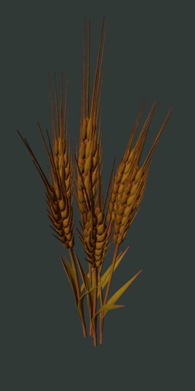 grain_3.jpg
