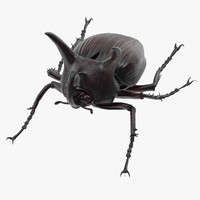 rhinoceros beetle pose 02 max
