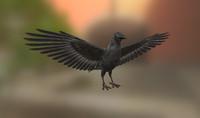 Midpoly Crow Raven Blackbird PBR