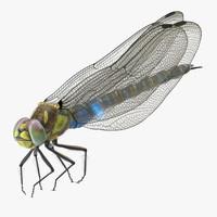 dragonfly pose 03 3d model