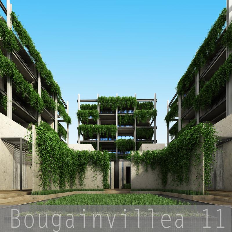 Bougainvillea_00.jpg