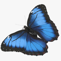 blue morpho butterfly wings 3d model