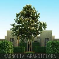 5 Magnolia grandiflora