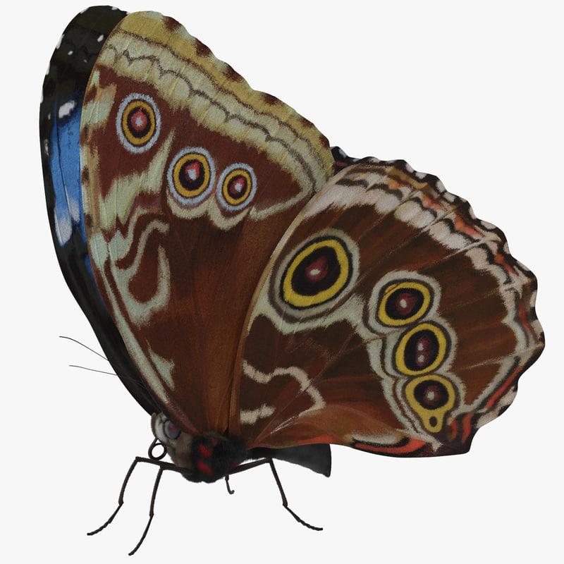 Blue_Morpho_Butterfly_03_001_Thumbnail_Square0000.jpg