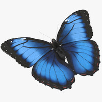 Blue Morpho Butterfly Flying Pose 02