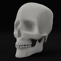 3d model of pbr uv-textured human skull