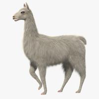 3d model white llama