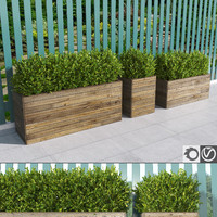 hedges wooden planters max