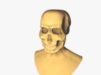 3d scull model