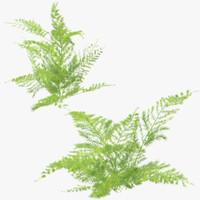 3d ferns 03 model