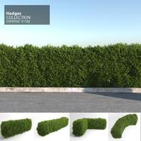 hedges corona v-ray 3d model