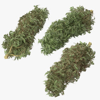 marijuana buds 01 3d model