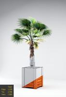 Palmetto tree in pot
