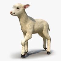 3d model lamb rigged