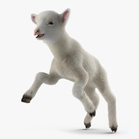 3d lamb pose 3 fur