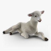 3d model lamb pose 4 fur