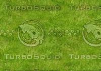 Grass 66