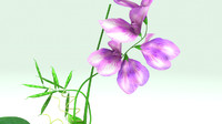 3d model lathyrus flowering