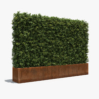 Boxwood Hedge in a Planter with a Steel Rusted Patina Finish