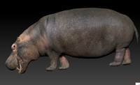 zbrush ztl hippo obj