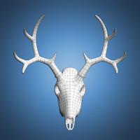 Deer Skull Base Mesh